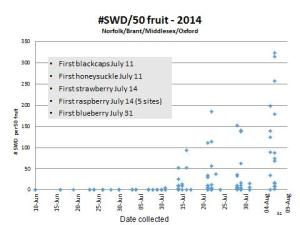 Figure 2:  Pattern of SWD fruit infestation in Ontario on 2014. Marketable fruit was collected and held at room temperature until SWD flies emerged