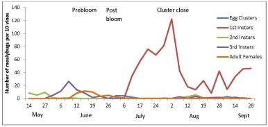 Mealybug graph