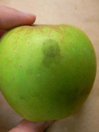 Figure 1. Sooty blotch on apple