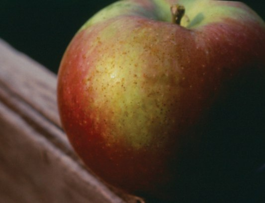 Figure 7. Fruit spotting caused by white apple leafhopper excrement.